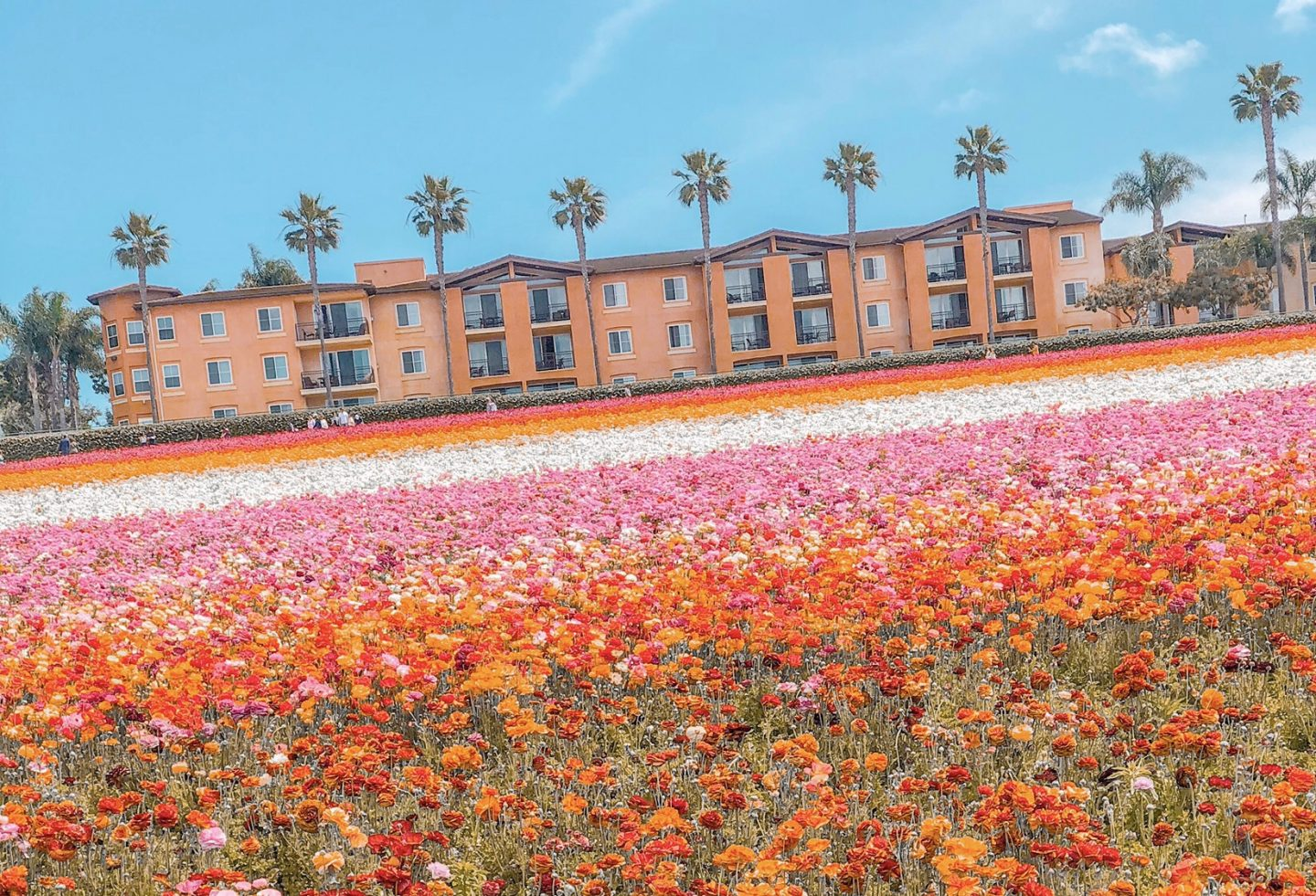A Chic Guide to The Flower Fields in San Diego County – 2019
